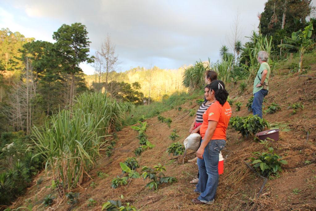 Menschen betrachten Kaffeejungpflanzen, im Hintergrund Landschaft im Hochland von Honduras