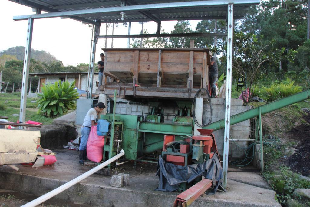 Weiterverarbeitung der Kaffeekirschen